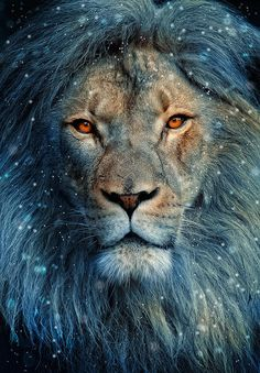 Lion In Winter: Photo by Photographer Debra Harder - photo.net