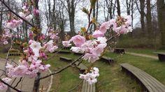 Romantik Springtime