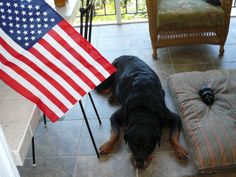 Rocky, The Patriotic dog!