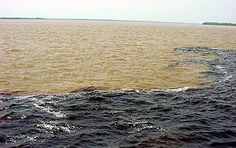 Meeting Of The Waters, Manaus, Brazil. The point where two tributaries of the Amazon River, the Rio Solimoes, a light sandy colour &  the Rio Negro may not be as black as its name suggests (it looks like tea without milk), but is the darker of the pair.