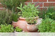 Die 8 Besten Bilder Von Krautergarten Balkongarten Blumen Und Diy