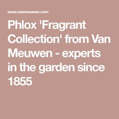 Phlox 'Fragrant Collection' from Van Meuwen - experts in the garden since 1855