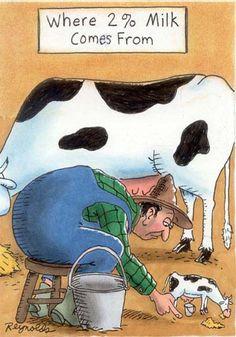funny humor photo: COW HUMOR C6.jpg
