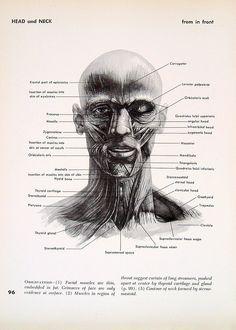 Head and Neck Anatomy - 1951
