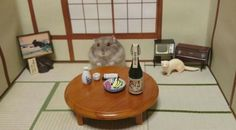 The Hamster Bartender - Neatorama