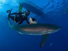 Scuba Diving in Cuba, El Colony, Maria la Gorda, Cayo Largo, Santa Lucia , Varadero, Trinidad, Diving in Cuba | WOW Cuba