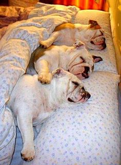 "Not a first ""pin"" for this pic ~ but I do love it!! Not only do our Bully's love ""our beds"" ~ they love to cuddle with each other as well."