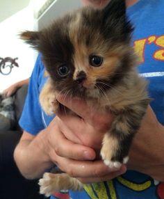 Precious little kitten