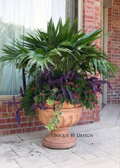 Chinese fan palm with impatiens, purple heart and trailing ivy (or use creeping jenny).