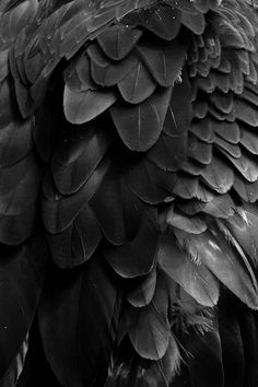 black+feather