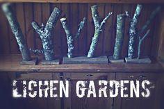 Picture of Lichen Gardens