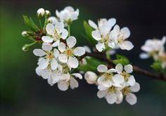 New free stock photo of nature flowers tree