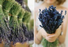 12 Ways To Use Lavender for Good Feng Shui: 12. Go to A Lavender Farm!