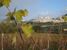First snow in Assisi and in the Sangiovese vienyards
