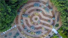 #droughttolerant, #nativeplant labyrinth that we installed in Del Mar, CA. We replaced a water-sucking lawn with this beautiful landscape! Get in contact with us for more information on our design techniques.