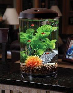 Koller Products Tropical 360 View Aquarium Starter Kit, 2-gallon - Chewy.com #AquariumLightingLEDProducts