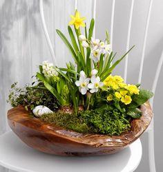 Spring Flower Arrangements, Succulent Arrangements, Floral Arrangements, Container Flowers, Container Plants, Container Gardening, Easter Flowers, Spring Flowers, Planting Bulbs