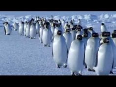 Vangelis - Theme from Antarctica -- out of 40 plus albums by the Master - Vangelis, I have - but missing 4 songs from the complete version of Antarctica RP New Age Music, My Music, Film Movie, Movies, Blade Runner, Penguin Walk, Walking Gif, National Geographic Wild, Movie Categories