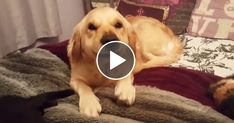 Life Without Dog Is Boring  Funny Dogs Compilation!