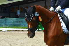 Sir Alfi my love Horses, My Love, Animals, Animales, Animaux, Animal, Animais, Horse