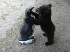 cute pictures of rescue animals   Cute Animals - Pets, Baby Pictures Stories & News - Animal Tracks ...