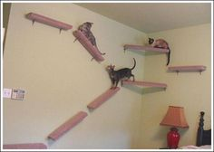 My three cats live in a BIG damn house, but i feel like something's missing. I'm looking in to putting these really awesome wall-stairs for my cats...