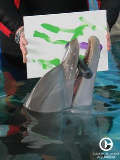 One of Winter the dolphin's favorite enrichment activities to do is painting! She loves to express her unique personality through her art!