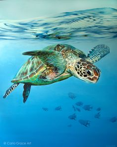 How Painting A Turtle Can Increase Your Profit! Painting A Turtle Sea Turtle Painting, Sea Turtle Art, Turtle Love, Ocean Turtle, Starfish Painting, Cute Baby Turtles, Sea Turtle Pictures, Beautiful Sea Creatures, Ocean Creatures