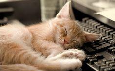favd_cutencats-July 28 2017 at 12:33PM