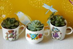 succulents in thrifted cups