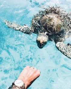 'Try to be like a turtle: At ease in your own shell' @debiflue found a new little friend at the beach who seems to like her Kapten golden mesh watch. | kapten-son.com