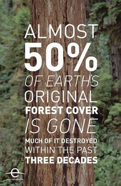 I'm going to say something right now when you cut down trees you think its just a tree it doesn't matter well it does trees take in the Carbon Dioxide which is bad for us to breathe too much in so think about that. That means in the next 3 decades there is going to be nearly none of the original forest left...