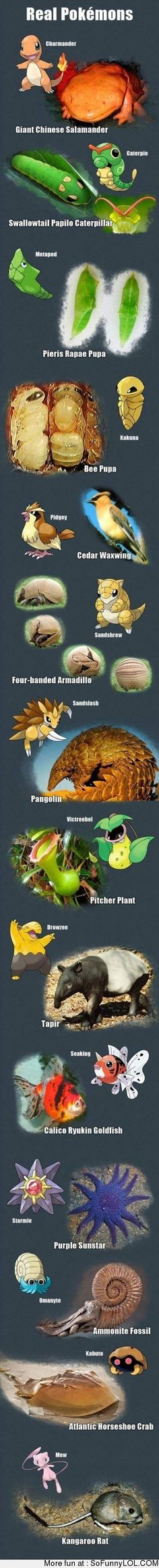Real Life Pokemon
