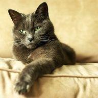 """""""All cats love a cus - http://crazyforkitties.net/all-cats-love-a-cus/"""