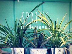 ARCTICdeco.com: Spring in Nunavut
