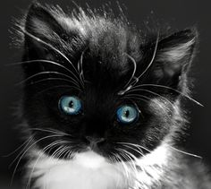 Kitten. by dolores
