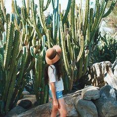 cacti dreams