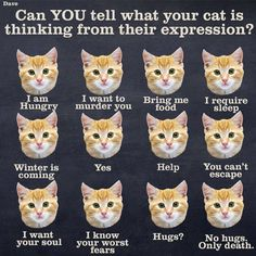 Here's a Handy Guide to Interpret What Your Cat is Feeling