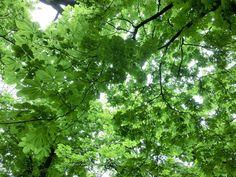 WWW  Wiersze Wycieczki Wspomnienia: Wiersz: Wiosenny deszcz