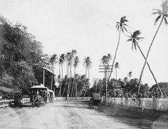Road to Waikīkī...1800s