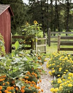 Garden by the barn!                                                                                                                                                                                 More