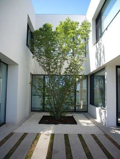 Architecture, Amazing Casa BR Architecture Design In Buenos Aires Argentina Designed By KLM Arquitectos Featuring White Wall, Patio, Garden Plants And Pebbles: Amazing Minimalist home with Courtyard in Buenos Aires Argentina Design Patio, Courtyard Design, Courtyard House, Exterior Design, Interior And Exterior, Garden Design, Interior Design Gallery, Home Interior Design, Artistic Tree