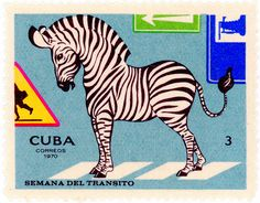 Cuba postage stamp: zebra c. 1970 designed by F. Román Compañy
