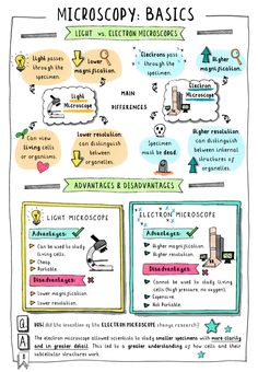 — Doctor Me Clever - 🌟 Get your FREE GCSE Biology Revision notes on microscopy 🔬. These colourful sketchnotes 🎨 - Biology Lessons, Science Biology, Science Fair, Ap Biology, Elementary Science, Physical Science, Science Education, Earth Science, How To Study Biology