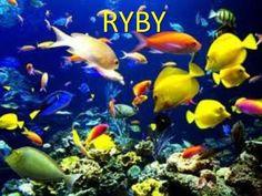 RYBY.