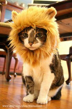 一瞬で百獣の王化する、猫用ライオン帽子 « 猫ジャーナル 猫ジャーナル