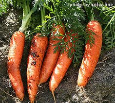 A great website with tips on growing specific veggies in your garden : )