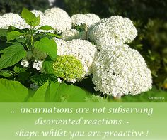 ... #incarnations are not subserving disoriented reactions ~ shape whilst you are proactive !