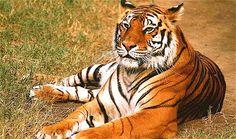 India Wildlife Journey to Explore a Wildlife of India