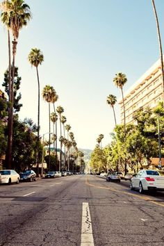 California palm trees street iphone wallpaper